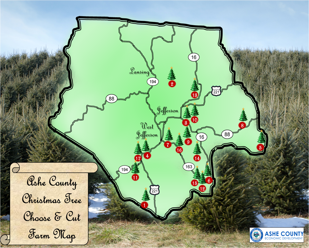Ashe County Christmas Trees